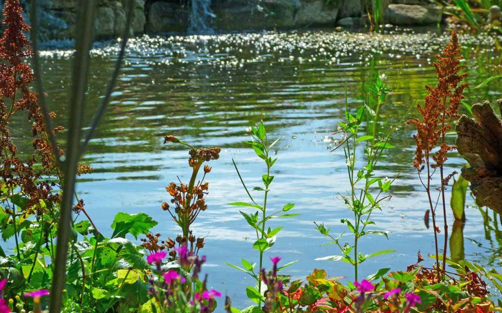 garden services pond maintenance